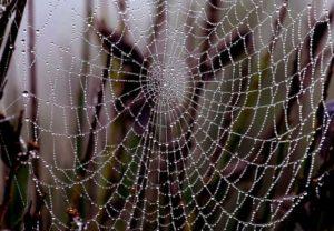 spinnenweb-140707-uitsnit-jpg_595